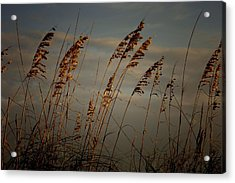 Acrylic Print featuring the photograph Sea Oats by Joetta West