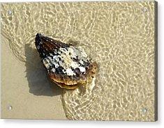 Sea Scallop Ride Acrylic Print by Florene Welebny