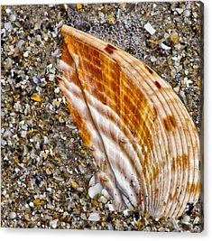 Sea Shell Acrylic Print