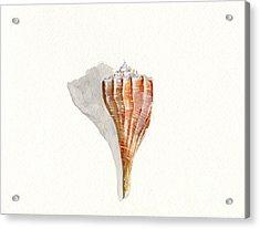 Sea Shell Watercolor Acrylic Print by Sheryl Heatherly Hawkins