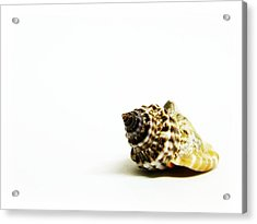 Sea Shell Acrylic Print by Weeping Willow Photography