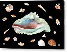 Acrylic Print featuring the photograph Sea Shells by David Lester