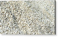 Acrylic Print featuring the photograph Sea Shells by Yew Kwang