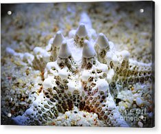 Sea Star Acrylic Print by Judi Bagwell