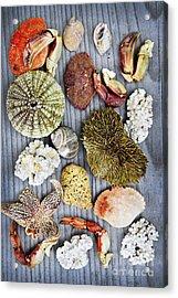 Sea Treasures Acrylic Print by Elena Elisseeva