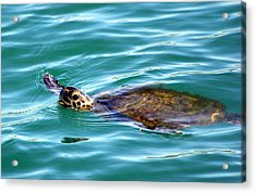Sea Turtle Acrylic Print by Jeanne Andrews