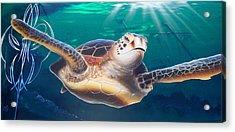 Sea Turtle Acrylic Print by Mike Royal
