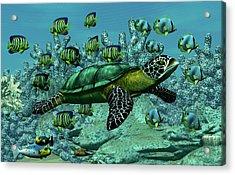 Sea Turtle Acrylic Print by Walter Colvin