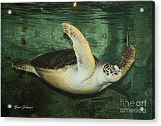 Acrylic Print featuring the photograph Sea Tuttle  by Yumi Johnson