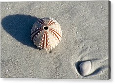 Sea Urchin And Shell Acrylic Print by Kenneth Albin