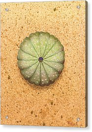 Sea Urchin Acrylic Print by Katherine Young-Beck