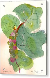 Acrylic Print featuring the painting Seagrapes by Joy Braverman