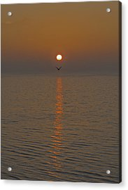 Seagull At First Light Acrylic Print by Gary Eason