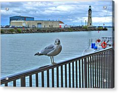 Acrylic Print featuring the photograph Seagull At Lighthouse by Michael Frank Jr