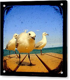 Seagull At The Beach - Ttv  Acrylic Print by Tracy Milchick
