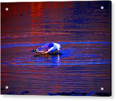 Seagull Bathing In Dramatic Light Acrylic Print by Catherine Natalia  Roche