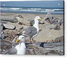 Seagull Bird Art Prints Coastal Beach Bandon Acrylic Print by Baslee Troutman