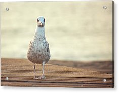 Seagull Acrylic Print by by Juanedc