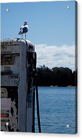 Acrylic Print featuring the photograph Seagull by Carole Hinding
