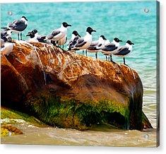 Seagull Cliff Acrylic Print