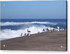 Acrylic Print featuring the photograph Seagull Hang-out by Peter Mooyman