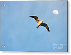 Acrylic Print featuring the photograph Seagull by Luciano Mortula