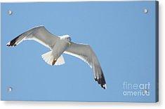 Seagull On The Sky Acrylic Print by Olga R