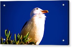 Seagull On Top Acrylic Print by Catherine Natalia  Roche