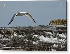 Acrylic Print featuring the photograph Seagull Overt The Rapids by Darleen Stry