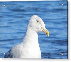 Seagull Acrylic Print by Pamela Turner