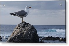 Seagull Acrylic Print by Luis and Paula Lopez