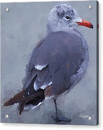Seagull Portrait I Acrylic Print by Jim Pavelle