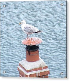 Seagull Resting On Chimney Acrylic Print