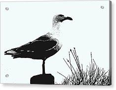Seagull  Acrylic Print by Serene Maisey