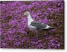 Seagull Standing Among Flowers Acrylic Print by Garry Gay