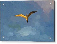 Seagull Sunrise Acrylic Print by Miguel Pumarejo