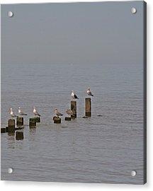 Seagulls At Rest Acrylic Print by Camera Rustica Bill Kerr