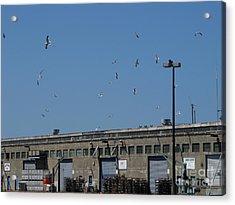 Seagulls By The Pier Acrylic Print by Serena Ballard