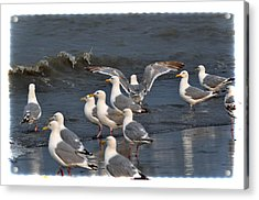 Seagulls Gathering Acrylic Print by Debra  Miller
