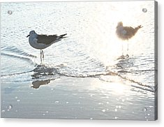 Seagulls In A Shimmer Acrylic Print by Olivia Novak