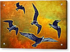 Seagulls In Flight Acrylic Print by Donna Pagakis