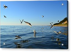 Seagulls Over Lake Michigan Acrylic Print by Michelle Calkins