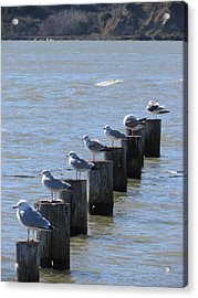 Acrylic Print featuring the photograph Seagulls Rest by Bonnie Muir