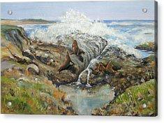 Seal Sanctuary Acrylic Print by Max Mckenzie