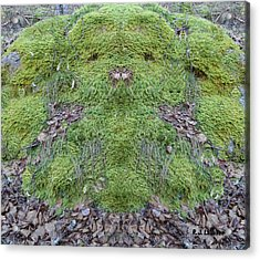 Search For The Mossman Acrylic Print