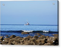 Searching For Crab Acrylic Print by Angi Parks
