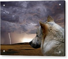 Searching For Home Acrylic Print by Bill Stephens