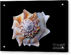 Acrylic Print featuring the photograph Seashell 1 by Deniece Platt