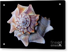Acrylic Print featuring the photograph Seashell 5 by Deniece Platt
