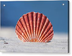 Seashell In Sand With Blue Ocean Background Acrylic Print by Tanya Ann Photography